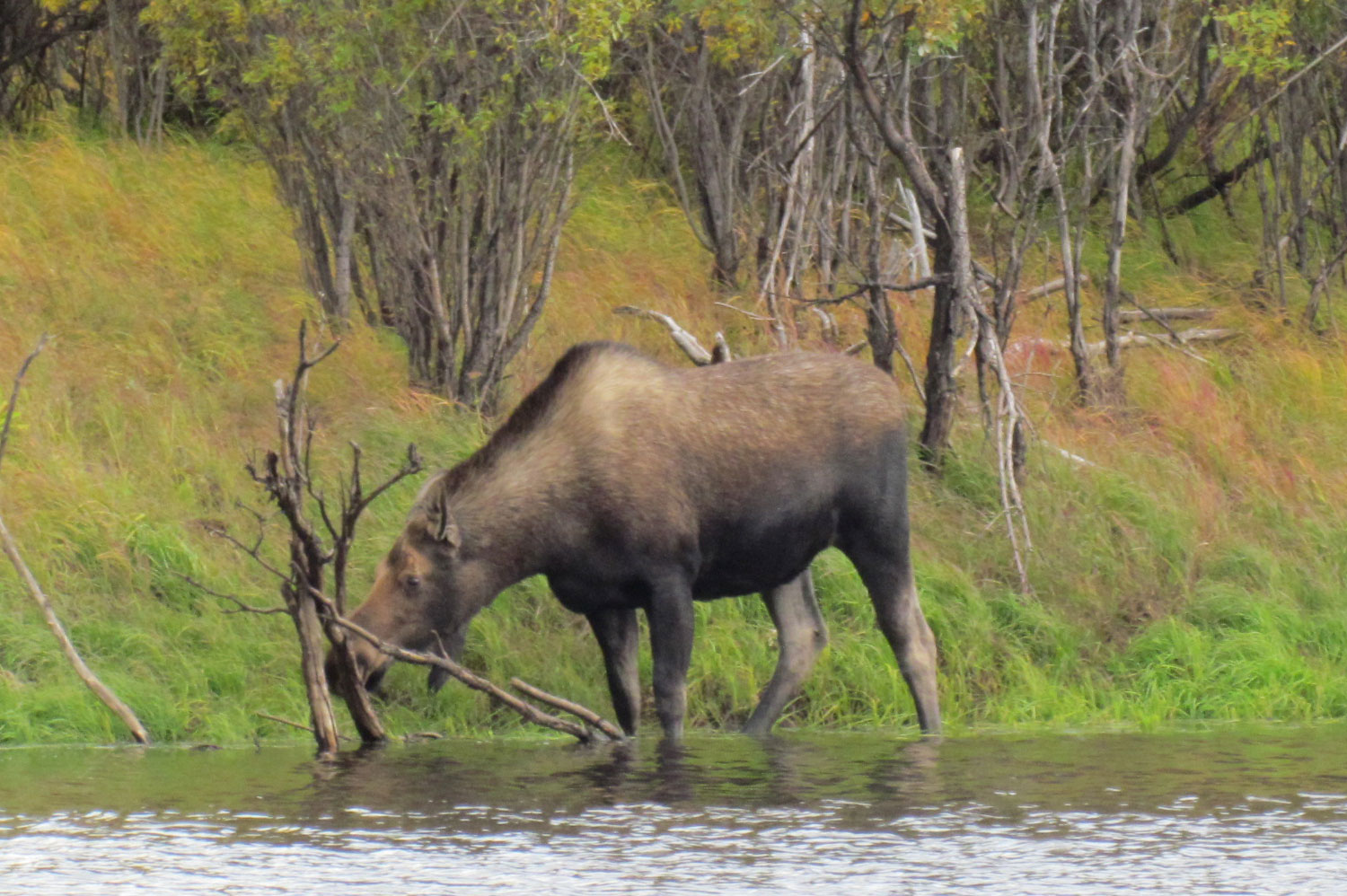 Alaska Wildlife Tour
