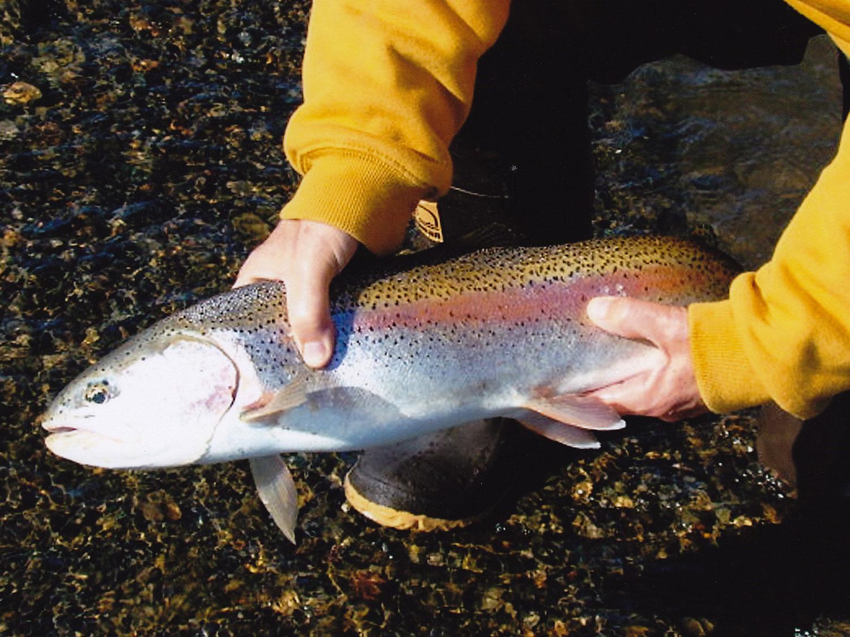 Trout Fishing Alsaka