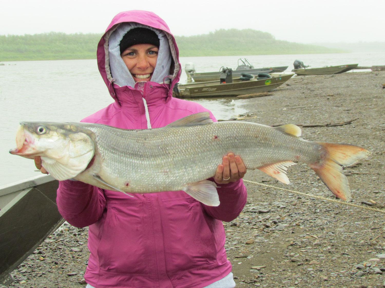 Sheefish Fishing Alaska