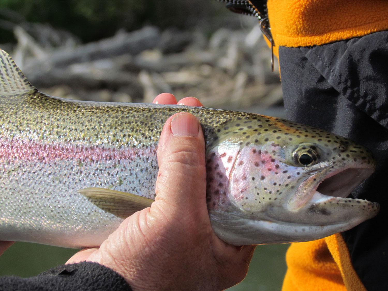 Rainbow Trout Fishing Trip Alaska