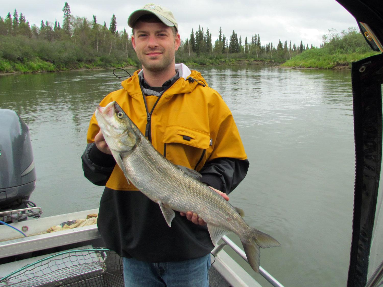 Sheefishing Alaska