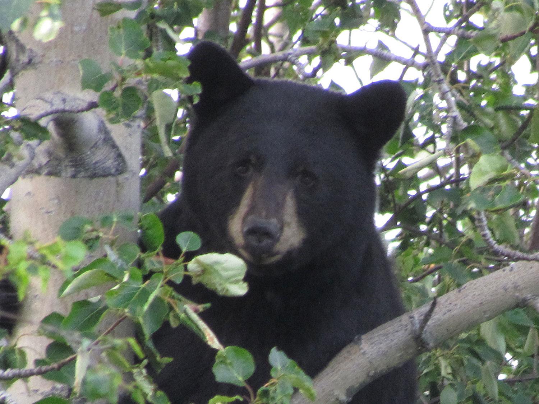 Alaska Wildlife Tours