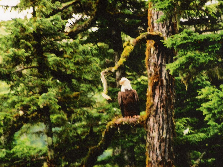 Alaska Wildlife Tour